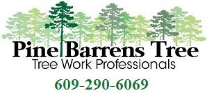 Pine Barrens Tree