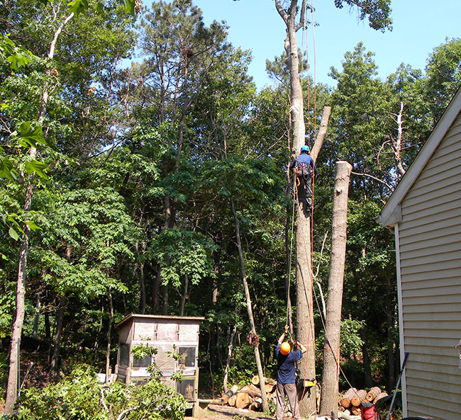 Services - Tree Removal
